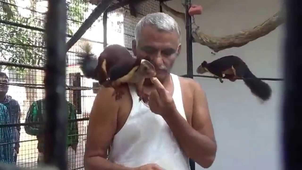 Prakash Amte